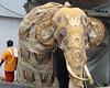 Perahera Elephant (1X7A4679b) (Dennis Candy) Tags: srilanka ceylon serendib kandy esala day perahera festival procession street parade buddhism religion culture tradition heritage elephant caparison coat decoration tusk ear head