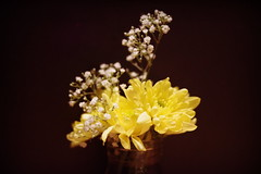 Night Flowers (Lepidoptorologic beauty*) Tags: pentax kp pentaxk pentaxkp da40mm hdda hd da hdda40mm28 da40 40mm 28 flowers blumen fleurs night