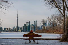 Yours truly enjoying a frigid January stroll in the park and the Toronto skyline (Phil Marion) Tags: frozen philmarion candid woman girl boy teen 裸 schlampe 나체상 벌거 desnudo chubby nackt nu ヌード nudo khỏa 性感的 malibog セクシー 婚禮 hijab telanjang nude slim plump tranny sex slut nipples ass boobs tits upskirt naked sexy bondage fuck tattoo fetish erotic feet cameltoe cock winterstations oriental asian latina japanese african khoathân beach public swinger cosplay gay wife milf dick crossdress pussy panties ladyboy babe