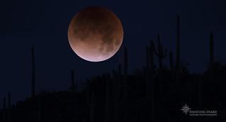 _45A7148 Blood Moon Lunar Eclipse2 ©Dancing Snake Nature Photography