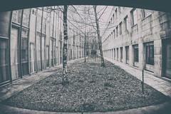 Facultad de Económicas (sairacaz) Tags: vigo galicia canon samyang 8mm fisheye ojodepez bn bw campus universidad arquitectura architecture perspectiva