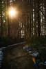 Kleines Waldstück bei Passade (Professor Besserwisser) Tags: passade schleswigholstein sonne sol sonnenstrahlen sunbeams rayosolar rayossolar rayosdesol bosque forest waldweg camino nikond3400 d3400 alemania germany deutschland norddeutschland probstei lensflare
