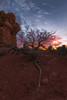 Desert Sunset (Jake Rogers Photo) Tags: rock dusk twilight tree sunset desert utah archesnationalpark panorama
