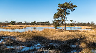Hatertse vennen winter landscape, Netherlands