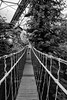 Bridge (teltone) Tags: sonyrx100iv sony street cornwall raw vacation holiday winter uk england aperturepriority fab scouser travel european edenproject eden garden bio