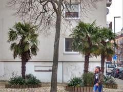 Trachycarpus fortunei (sander_sloots) Tags: hemp palms trachycarpusfortunei rotterdam franselaan henneppalm trees bomen flatgebouw lamppost lantaarnpaal lichtmast philips fgs105 armatuur lantern luminaire lampadaire palmen winterhard