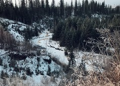 Blackmud Creek (bratli) Tags: 52weeksfor2018 hometown edmonton alberta canada blackmudcreek valley ravine