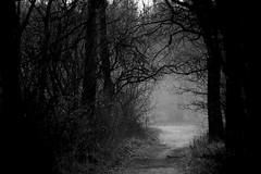 Alba (carlo612001) Tags: bosco foresta mattina sentiero alberi alba woods forest