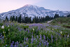 Lavender dawn at Paradise (Laura Jacobsen) Tags: hiking mtrainier mtrainiernationalpark mttahoma nationalparks paradise rainier wildfire wildflowers