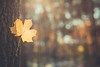Bokeh Magic (icemanphotos) Tags: forest autumn inspire light leaf dreamy nature