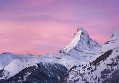 First light (inkasinclair) Tags: swiss alps swissalps matterhorn zermatt switzerland mountain sunrise sky clouds pink alpenglow snow trees landscape majestic soft light first