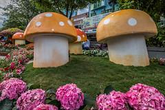 Macro mushrooms (Rakuli) Tags: ifttt 500px mushrooms sculpture festival flowers tet vietnam saigon lunar new year