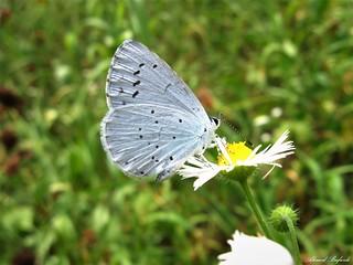 Butterfly 1614