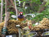 Finches At The Feeder At Magic Wings (amyboemig) Tags: magicwings butterfly conservatory butterflies greenhouse gouldian finch birds bright