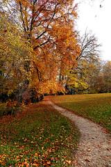 Autumn park (Carandoom) Tags: park autumn 2017 switzerland geneva parc sentier arbre forêt route pelouse feuille leaf