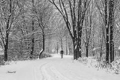 Cyclists (Nataša Bandović) Tags: snow trail bike forest ontario winter park canada explorecanada canadianwinter people trees cyclists ontariotrails cold natasabandovic natasabandovicphotography canondslr canonphotography canon nature naturephotography blackandwhite blackandwhitephotography bikeride