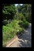 Duke Gardens July 2015 9.12.21 PM (LaPajamas) Tags: nc flora dukegardens gardens