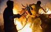 Sankranthi Kichchu Haisodu 2018 (Ashit Desai) Tags: fire jumping cows bulls sankranti festival ritual ashit desai 2018 sankranthikichchuhaisodu tradition india karnataka south kichchu haisodu sankranthi