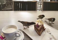Feathery thieves (Maria MK2011) Tags: sparrows birdies birds ljubljana slovenia coffee cafe breakfast dessert table action thieves cake cookie tasty noshame food