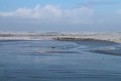C'mon in. The Water's Fine. (Mïk) Tags: swellday january182018 beach hightide 30ftswells pacificocean oceanshoreswa washington notheotherwashington chancealamer beachaccess