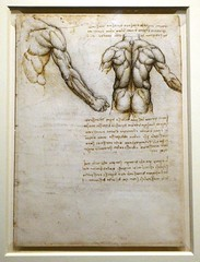 Leonardo da Vinci, The muscles of the back and arm, c.1508 (jacquemart) Tags: artandpower charlesii queensgallery london royalcollection drawing renaissance leonardodavinci themusclesofthebackandarm c1508