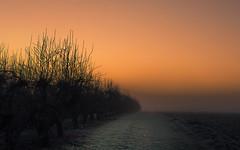 Frozen Colors (Netsrak) Tags: baum bäume dezember eu europa europe herbst landschaft morgen natur nebel sonne sonnenaufgang autumn december fall fog landscape mist morning nature sun sunrise tree trees