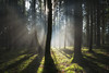 Ode to Joy (der_peste (on/off)) Tags: forest raysoflight raysofgod godrays sunrays sunbeams mist fog misty foggy mood moody woods light shadow lightandshadow crepuscularrays nature forestscape trees