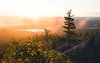 Glorious autumn morning (Nippe16) Tags: autumn landscape forest woods mist misty foggy dreamy nature atmosphere sunlight fell mountain tree spruce