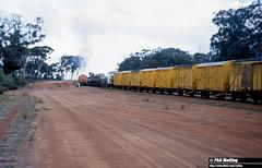3163 XA1406 Wickepin Bank 9 July 1982 (RailWA) Tags: railwa philmelling westrail 1982 xa1406 wickepin bank