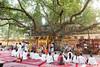 Sacred tree in Mahabodhi Temple...India (geolis06) Tags: geolis06 asia asie inde india bihar bodhgaya mahabodhitemple mahabodhi temple bouddhisme boudha buddha unescoworldheritage unesco patrimoinemondialunesco inde2017 pilgrim pélerin moine monk prière prayer devotion dévotion bodhi bodhitree olympuscamera arbresacré arbredeléveil nun buddhism buddhist