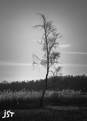 lone tree (jst_pictures) Tags: black white blackandwhite forest trees winter tree photography clear sky sharp lake grass hd wallpaper background canon fd lens sad sadness woodland morning netherlands amsterdam amstelveen focus aperture 1100d nature cloud naturephotography land light season new wallpaperhd dark lightroom picture square plants