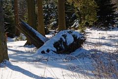 Winter am Albrechtsplatz im Hochsauerland (Rolf Majewski) Tags: sauerland hochsauerland winter schnee wald schmallenberg