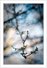 Winter and Spring Through a Russian Eye. (Mikec77) Tags: buds arty