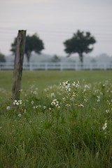 Wildflowers in Field (awdylanis) Tags: wildflower wild flower flowers wildflowers tree powerlines power lines morning sunrise am fence whitefence overgrown growing hippie