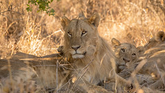 Nairobi-Nationalpark-1780 (ovg2012) Tags: kenia kenya nairobi nairobinationalpark