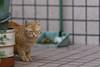 cat (Ache_Hsieh) Tags: cat cute pet 貓 street nikon sigma 135mm f18 dg hsm art d500