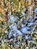Isete -|- Icy (erlingsi) Tags: icy is frost bergen ice erlingsi iphone erlingsivertsen