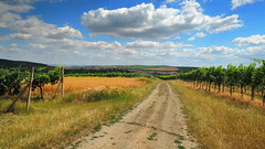 The road to the vineyards / Cesta k vinicím (ZdenHer) Tags: road vineyards sky cloudt landscape