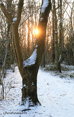 Sun Tree (ChristineGibbs) Tags: canon eos eos6 canon24105mm leicestershire hinckley snow landscape sunlight burbagecommon burbage sunbeams path woods burbagecommonwoods