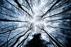 (Bruno MATHIOT) Tags: sigma 1020 canon 760d alsace france french bleu blue cold froid arbre tree forest forêt nature monochrome