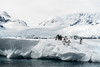 love in a world of ice (thomas.reissnecker) Tags: ngc glaciers ice iceberg penguins antarctica landscape