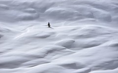 Italy, lost through snow waves (Vittorio Ricci (thanks +++ 3.3 millions views)) Tags: tree snow conifer lonetree dolomites dolomiten