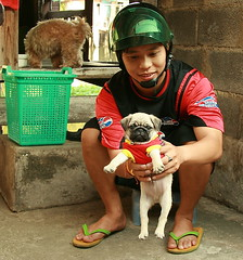 showing us his new pug puppy (the foreign photographer - ฝรั่งถ่) Tags: young man motorcycle helmet pug puppy squatting khlong thanon portraits bangkhen bangkok thailand canon kiss