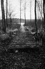 Where to go? (Magdalena Szata) Tags: analog ilfordid11 kodaktmax400plus lipowo mazury minoltacle poland blackwhite joga nature yoga