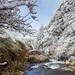 霧淞 (蔡蔡543) Tags: 台灣 台中 台7甲 霧淞 自然美景 雪 小溪 山林 6d 漸層