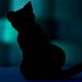 Edgar A. Poe - Black Cat - My Favourite Novel - Macro Mondays (Andrea Ha) Tags: macromondays blackcat fiction nikon d7200 novel myfavouritenovel