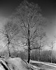 Trees-2 (jwgreg) Tags: film canona1 hp5 ilford ftduffield kentucky