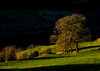 First Light (Peter Quinn1) Tags: monsalldale wyevalley derbyshire firstlight shadow peakdistrict winter