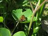 CKuchem-5852 (christine_kuchem) Tags: biene blüte blüten garten insekten nahrung natur naturgarten nektar pflanze privatgarten selbstaussaat sommer wildbienen wildpflanze naturnah natürlich wild