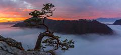 Panoramic view from Sokolica (Paweł Gałka) Tags: sunrise fog misty mountains pieniny pine canon tokina poland forest